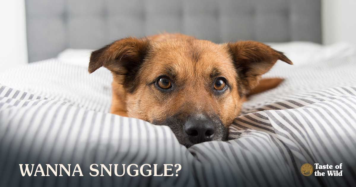 A dog laying in a bed | Taste of the Wild Pet Food