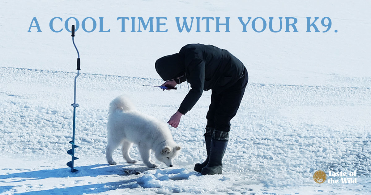 Man Ice Fishing with Dog   Taste of the Wild