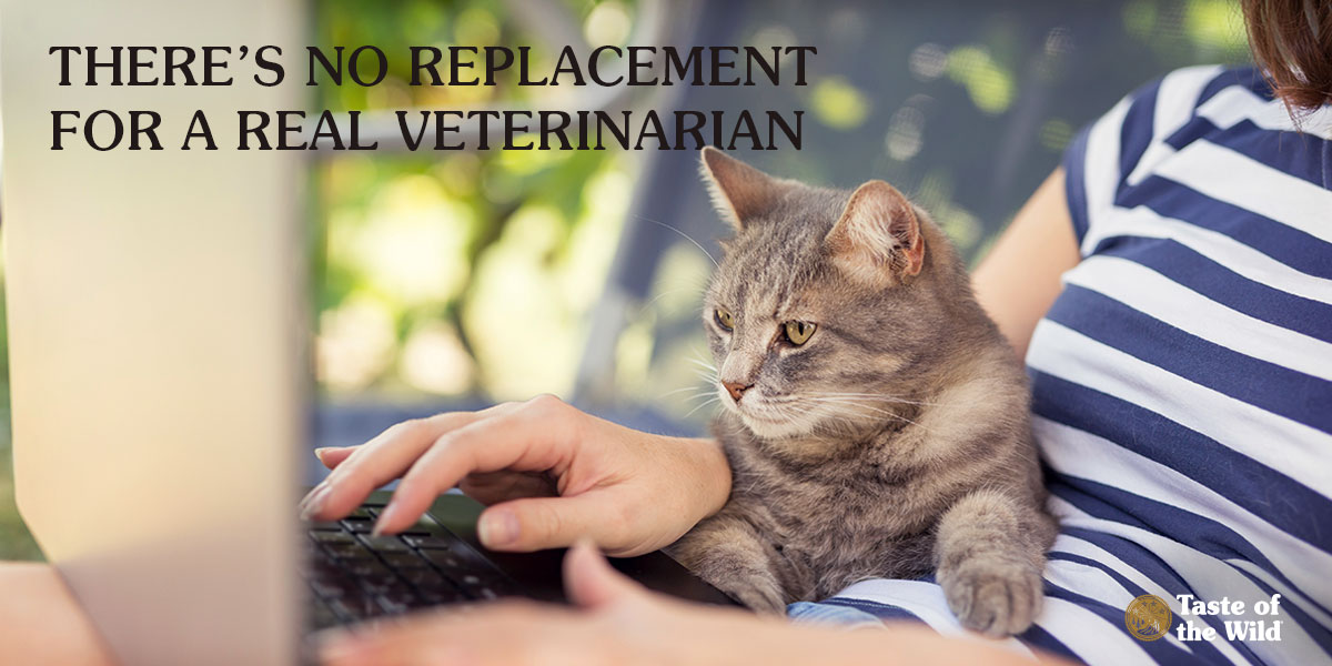 Female Cat Owner Researching on a Laptop with Her Cat | Taste of the Wild