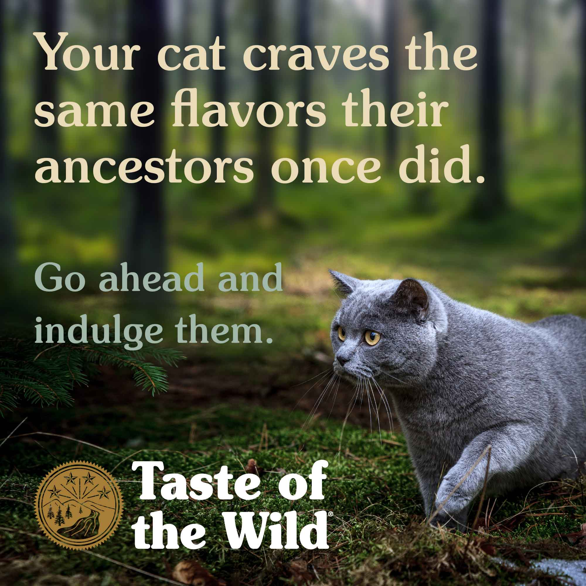 Your cat craves the same flavors their ancestors once did.