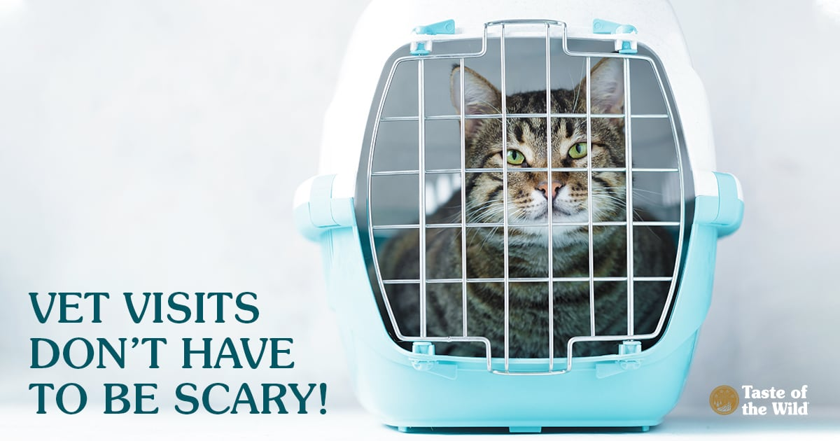 Cat Sitting in a Carrier | Taste of the Wild