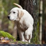 Dog Walking in the Woods | Taste of the Wild