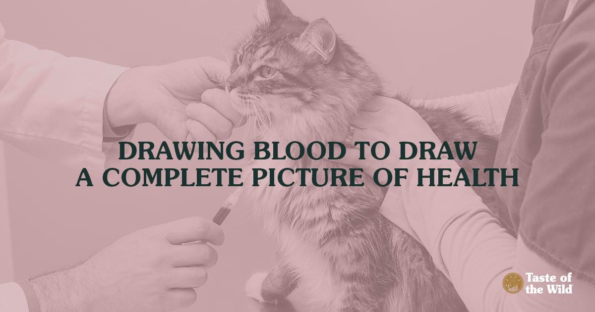 Vet Taking Blood Sample from Cat | Taste of the Wild