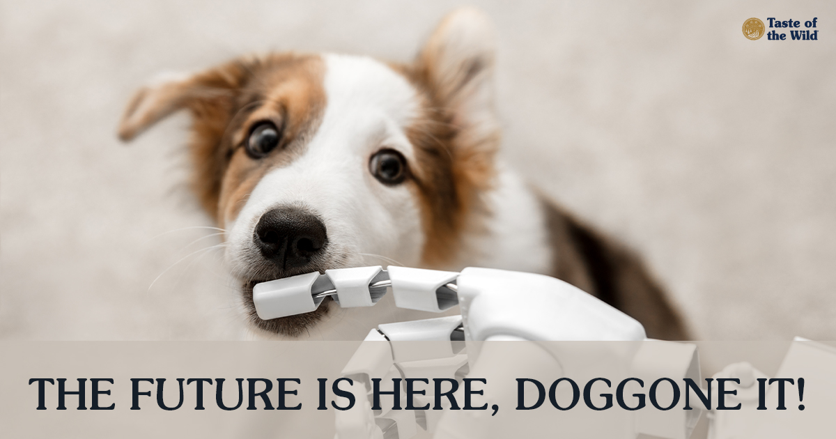 Brown and White Dog Biting the Finger of a Robot Hand | Taste of the Wild