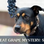 A Black and Brown Dog Staring at Hanging Grapes   Taste of the Wild