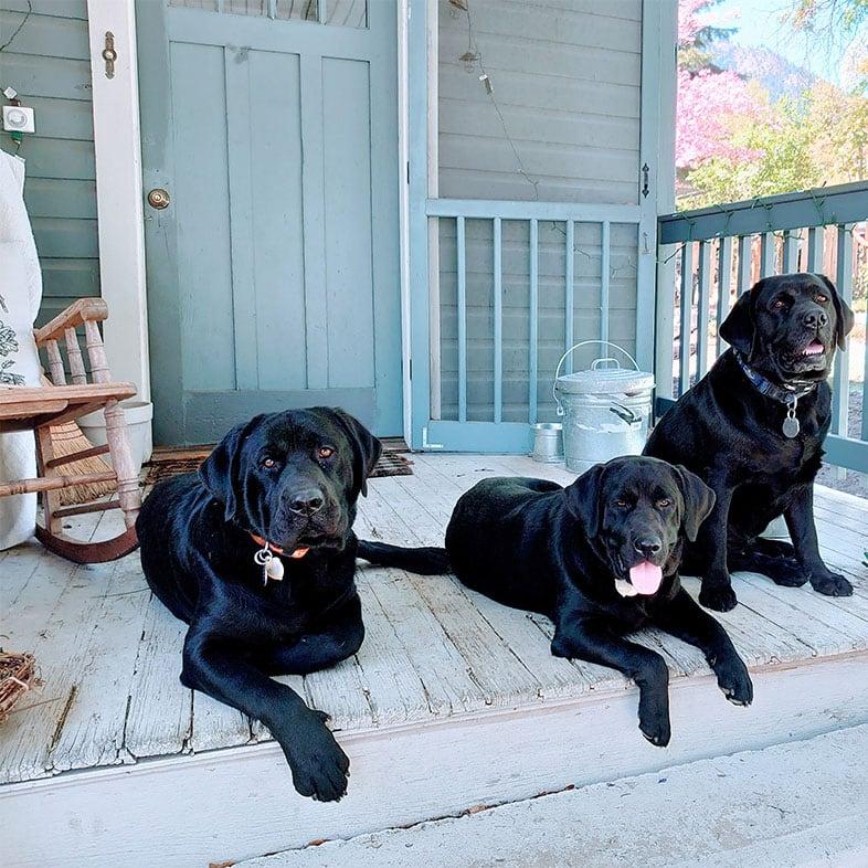 Three Black Labrador Retrievers on a Porch | Taste of the Wild